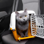 Traveling with Cats by Car: Do's and Don'ts